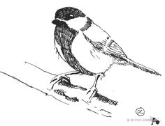The great tit!   D is for Doodle