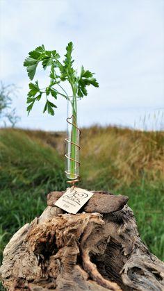 Viole in der Herz-Spiralen-Halterung aus Draht auf ausgewählten Treibholz-Stücken, als Mini-Vase verwendbar, als Sammelbehälter für kleine Fundstücke, Sand... Kupferdraht, non-tarnish (beschichtet, behält Farbe und Glanz)