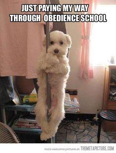 dog-gone-it