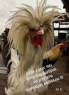 Funny Qoutes, Tears Of Joy, Greek Quotes, Beach Photography, True Words, Good Morning, Funny Animals, Haha, Funny Pictures