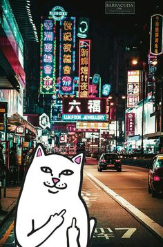#ripndip #middle #finger #cat #wallpaper #iphone #hongkong