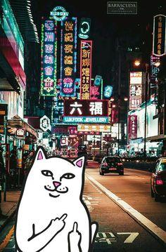 #ripndip #middle #finger #cat #wallpaper #iphone #hongkong