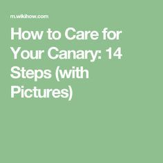 How to Care for Your Canary: 14 Steps (with Pictures) Class Pet, Canary Birds, Corn Snake, Pocket Pet, Cattle Farming, Weights For Women, Pet Care Tips, Hollyhock, Strong Body
