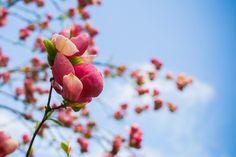 Colorful primavera Foto gratuita