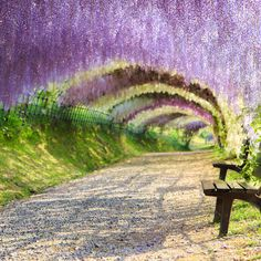 Most beautiful places to visit and things to do in Japan