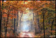 forest for everyone by ellybes1 #nature #mothernature #travel #traveling #vacation #visiting #trip #holiday #tourism #tourist #photooftheday #amazing #picoftheday