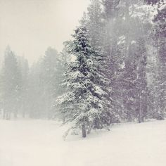 It is snowing for the first time this season here. It's just a few flake past my office window, nothing like the picture above. Oh, I just found out I get Monday off. Merry Christmas!