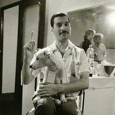Freddie Mercury, Leyenda de la música y Amigo de los Animales, hoy 05/09/2014 hubiese cumplido 68 años. Felicidades allá donde estés!!!