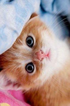 Pretty Orange Kitty