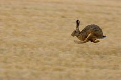 Hare Today by vlad259, via Flickr