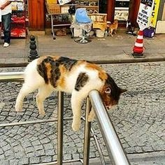 PetsLady's Pick: Funny Exhausted Cat Of The Day...see more at PetsLady.com -The FUN site for Animal Lovers