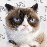Take a look at the Grumpy Cat Collection event on #zulily today!
