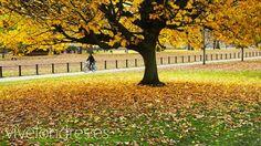Londres Verde | Parques, medios de transporte y lugares ecológicos en Londres | Londres #london #travel #viajar #turismo #sights www.vivelondres.es