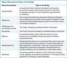 Major Neurotransmitters in the Body