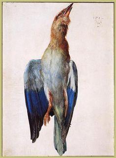 Dead Bluebird - Albrecht Durer
