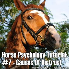 Horse Psychology Tutorial - Part 7 Common Causes Of Distrust