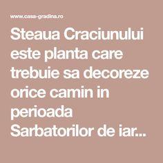 Steaua Craciunului este planta care trebuie sa decoreze orice camin in perioada Sarbatorilor de iarna.