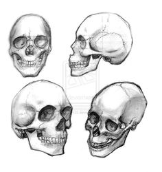 Skull sketches by me.