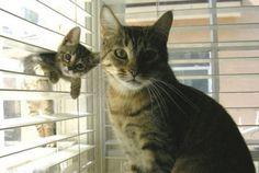 そっくりな猫の親子01