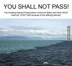 Incredible natural phenomenon where the Baltic and North seas meet but don't mix due to different densities