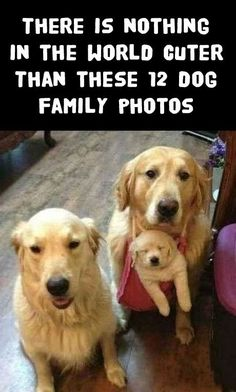 OMG, I just melted!!!! http://theilovedogssite.com/there-is-nothing-in-the-world-cuter-than-these-12-dog-families: