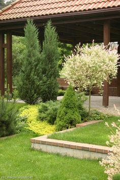 Wierzba, iglaki i tojeść tworzą tę ciekawą roślinną aranżację Garden Design, Front Yard Landscaping Design, Plants, Yard, Dream Garden, Landscape, Hydroponics, Garden Plants, Gardening Tips