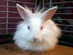 BLU Bunny Rabbit • Baby • Male • Medium The Humane Society for Tacoma and Pierce County Tacoma, WA