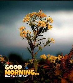 Looking for for images for good morning motivation?Browse around this website for unique good morning motivation ideas. These entertaining quotes will make you enjoy. Funny Good Morning Images, Latest Good Morning Images, Good Morning Beautiful Quotes, Good Morning Quotes For Him, Good Morning Inspirational Quotes, Good Morning Picture, Good Morning Flowers, Good Morning Good Night, Morning Pictures