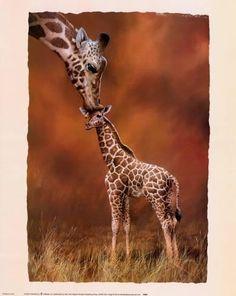 Afbeeldingsresultaat voor giraffe kus
