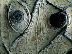 Immagini della natura: forme artistiche Corteccia bianca