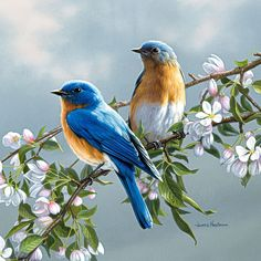 Couple of birds on Tree Branches HD Desktop Wallpaper Background Cute Birds, Pretty Birds, Beautiful Birds, Cherry Blossom Tree, Blossom Trees, Halloween Imagem, Bird Wallpaper, Mobile Wallpaper, Bird Pictures