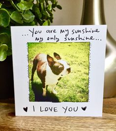A personal favorite from my Etsy shop https://www.etsy.com/listing/281196528/you-are-my-sunshine-boston-terrier
