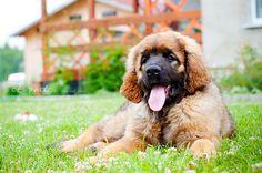 Www petclic es la mayor tienda online de productos para mascotas la