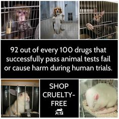 database of companies that DO & DO NOT test on animals: http://www.peta.org/living/beauty-and-personal-care/companies/default.aspx