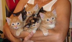 Puppies for Peace Tiny Baby Animals, Cute Animals, Feral Kittens, Cats And Kittens, North Ridgeville, Animal Control, Little Kittens, Cat Memes, Cool Cats