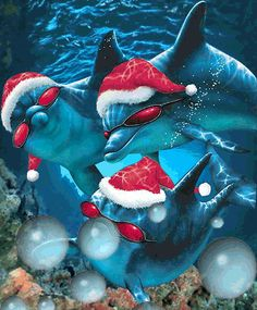 christmas dolphins pics - Google Search