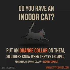 Cat Care Tips Kitty Convict Project, A Call to Make Bright Orange the Universal Color of Indoor Cats - The Kitty Convict Project by Matt Inman of The Oatmeal and Exploding Kittens is a wonderful idea that is trying to make the color of convict orange an Crazy Cat Lady, Crazy Cats, Exploding Kittens, Cat Care Tips, Pet Care, Pet Tips, Outdoor Cats, Cat Health, Health Tips