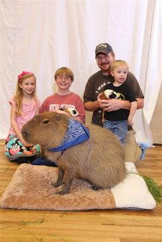 1000+ images about Capybaras on Pinterest | Rodents, Pets ...