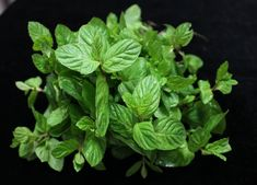 psoriasis cream - new psoriasis treatment.natural relief for psoriasis 7452441238 Planter Menthe, Growing Mint, Spearmint Essential Oil, Essential Oils, Fresh Mint, Kraut, Fresh Herbs, Container Gardening, Herb Container