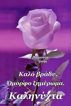 Good Night Flowers, Home Vegetable Garden, Good Morning, Diy And Crafts, Baby Shower, Rose, Greek, Anna, Quotes