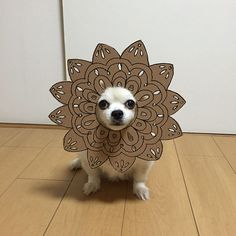 Japanese Woman Creates Hilarious Cardboard Cutouts With Her Dog (10+ Pics)