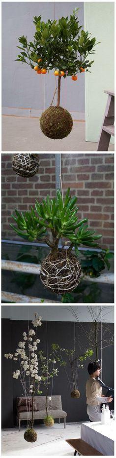 Gardening Ideas : string garden  Little Planet