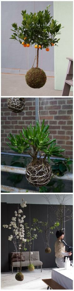 Gardening Ideas : string garden  Little Planet