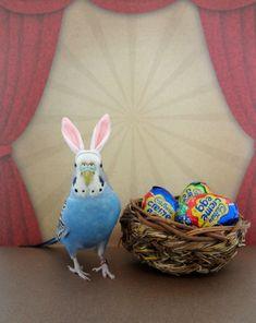 24 Hours O' Cute: Hoppy Easter @ 10:45pm PT (BONUS!). #birds #Easter #parakeets