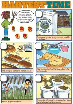A sequencing activity showing how bread is made - useful at harvest festival time.