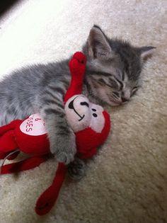 """""""llbwwb:  Sweet Dreams and Cuddles Wonderful Friends :) via:cutestuff  """""""