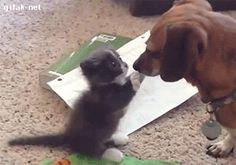 Please let me boop you!