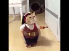 Video: Hewan Lucu ( Funny Animal ) # New 2015