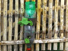 Here is a way to maximize your limited porch or garden space by growing vertically. You'll learn to make drip-irrigating garden towers out of recycled 2-liter soda bottles. This method works well for growing flowers, herbs, and small...