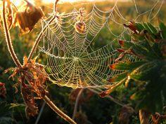 web...